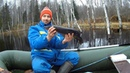 Рыбалка в Ноябре в Карелии на щучьем,красивом болотном озере