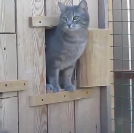 Hello, it's me, cats