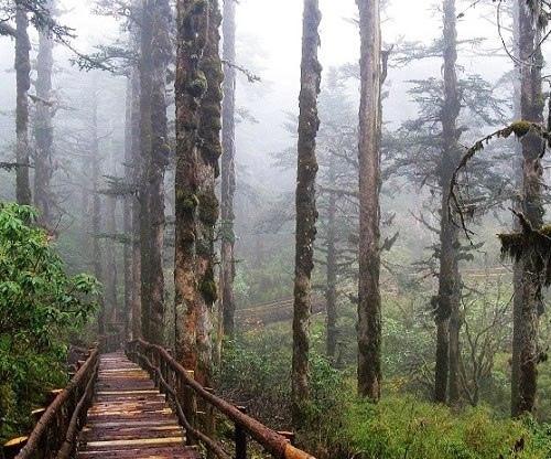 Долина Черного бамбука - одна из сильнейших аномальных зон Земли