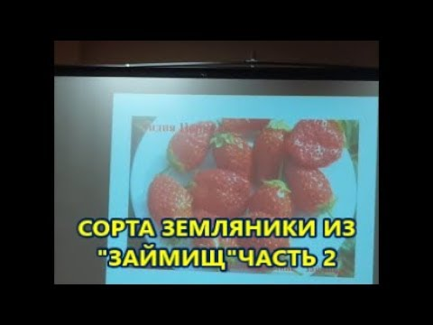Сорта земляники из ЗАЙМИЩКучумова Е.А.часть 2.