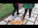 Веселый пес, Армения