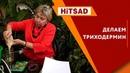 Триходермин Своими руками ✔️ Супер способ от Хитсад ТВ