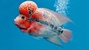 Необычайные аквариумные рыбки