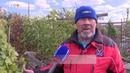 Как вырастить южные плодовые деревья в Удмуртии