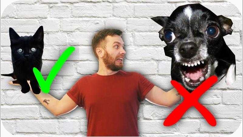 Пять причин почему кошки лучше собак Spoiler в большом городе НЕЛЬЗЯ заводить собаку