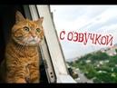 Приколы с котами – Смешная озвучка животных – РЖАКА ДО СЛЁЗ! Тест на психику - PSO