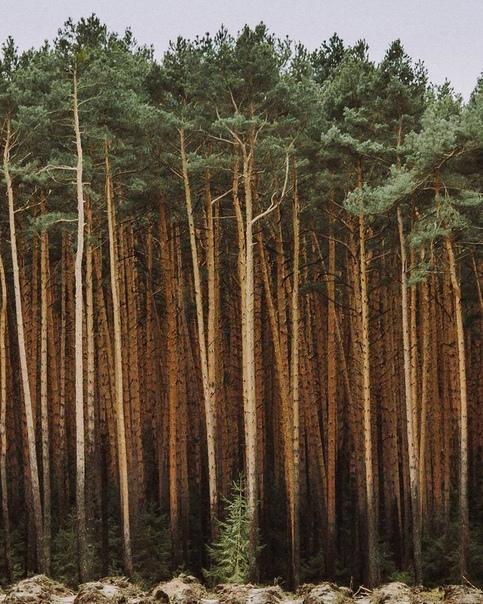 Лес место мистическое и таинственное Кажется, будто здесь концентрируется особая энергетика и часто происходит что-то, что за гранью понимания. Загадочная и даже немного пугающая энергия лесов
