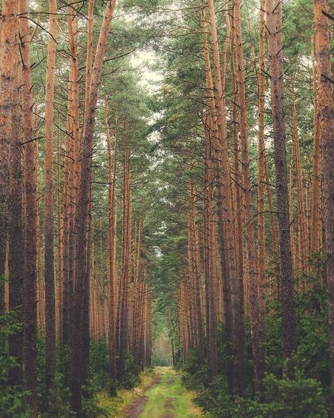 Лес  место мистическое и таинственное