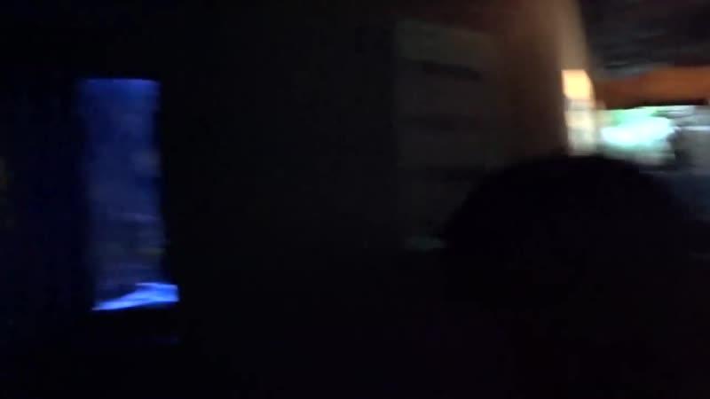 Lega Play САМЫЙ ЛУЧШИЙ ЗООПАРК В МИРЕ ИСПАНИЯ ТЕНЕРИФЕ ЛОРО ПАРК ВЛОГ ОТ LEGA PLAY 6