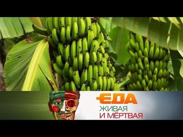 Еда живая и мёртвая: радиоактивны ли бананы и все о лечении горчичниками (27.01.2018)