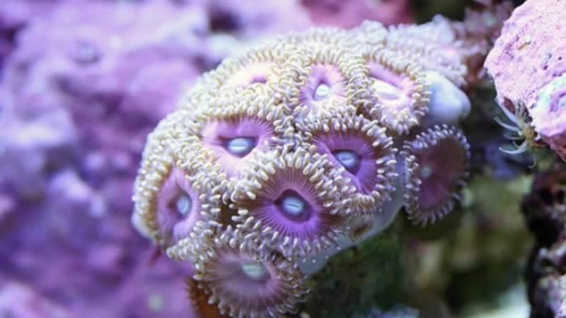 Подводный мир и макросъёмка кораллов !