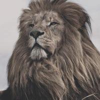 Анкета Lion-Daf Moris-To