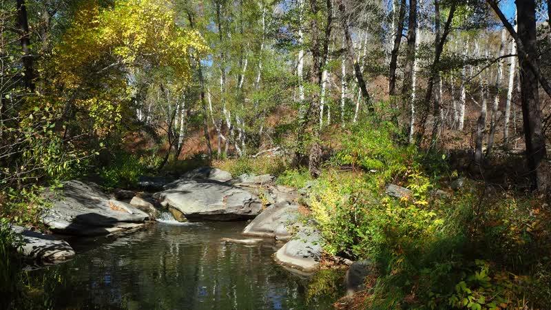 Река Губерля в Карагае восточное Оренбуржье 4К