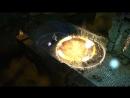 Геймплейный трейлер игры Warhammer: Chaosbane - Rise of Chaos!