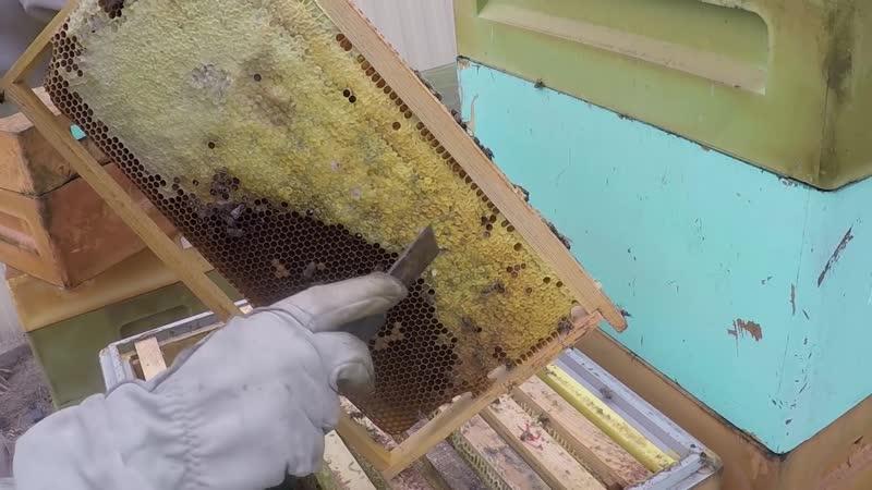 Термообработка пчел в перспективе