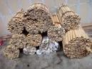 Извлечение коконов осмий из тростниковых трубок
