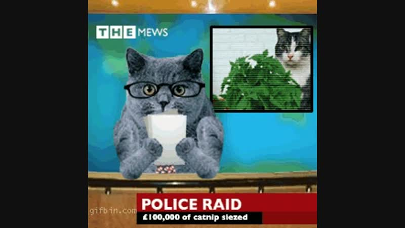 Cat news - caught with catnip