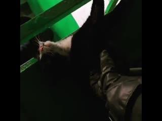 В Спасске-Дальнем пожарные спасли кота