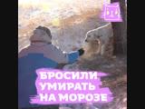 Бросили собаку умирать на морозе