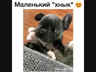 Ты же моя зайка! 😍😘