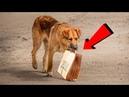 Каждый день эта собака приходила за едой к людям и уносила её в пакете к подземному переходу