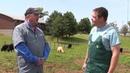 Определение беременности у крупного рогатого скота / Pregnancy Testing in Cattle