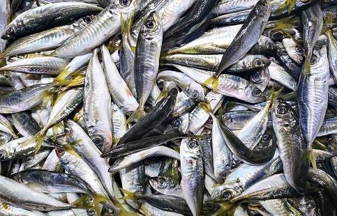 В Артеме пресечено хранение и переработка небезопасной рыбной продукции