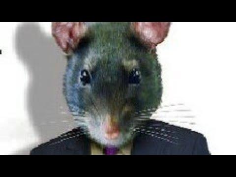 Про крыс на работе (на вахте)