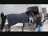 Такие прелестные лошадки ❤️