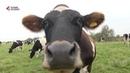 Перший Західний Сімейні ферми Проекту Розвиток молочного бізнесу в Україні