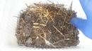 Разведение червей доступно каждому или Как накормить наноферму
