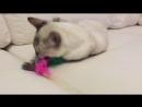Линкс котик