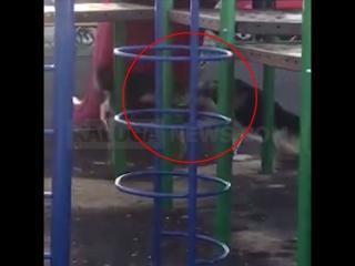 Стаи бродячих собак на детской площадке