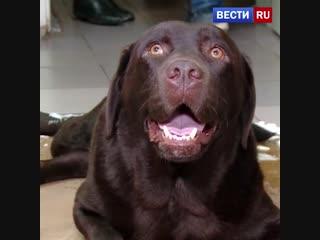 В Свердловской области спасли собаку-поводыря