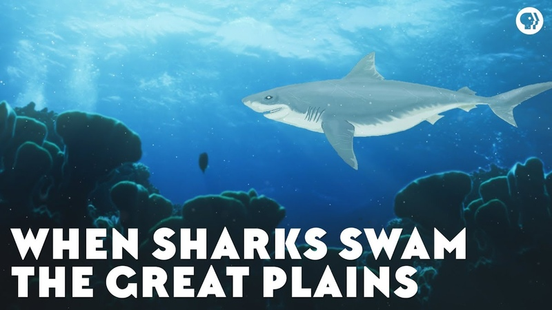 When Sharks Swam the Great Plains