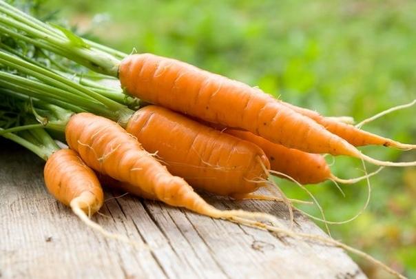 Морковь: летом похрустеть и на зиму запасти