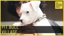 Where Pit Bulls Are Saved Loved and Redeemed 60 Second Docs