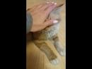 Огонёк- Гоша, грустный котик