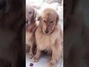 Хитрый пёс сдал «подельников» грозному хозяину