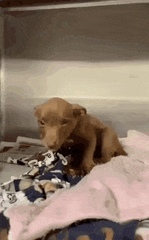 Pupper has the best smile after being adopted - Create, Discover and Share Awesome GIFs on Gfycat