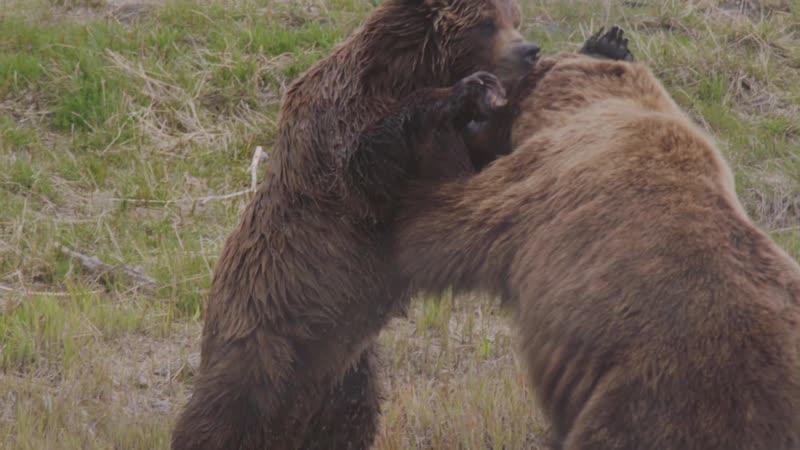 Заповедная Аляска Animal Planet
