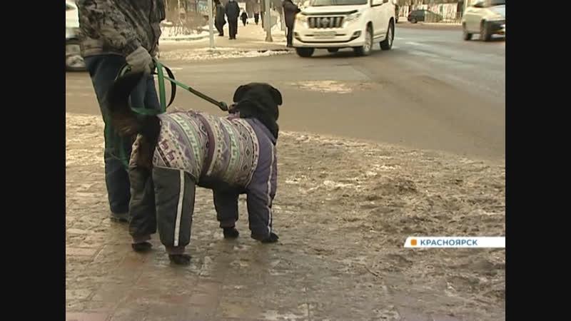 Красноярцы жалуются на грязное месиво под ногами: насколько вреден реагент на улицах города?