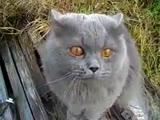 Открой глаза - сказал кот (ВоК)