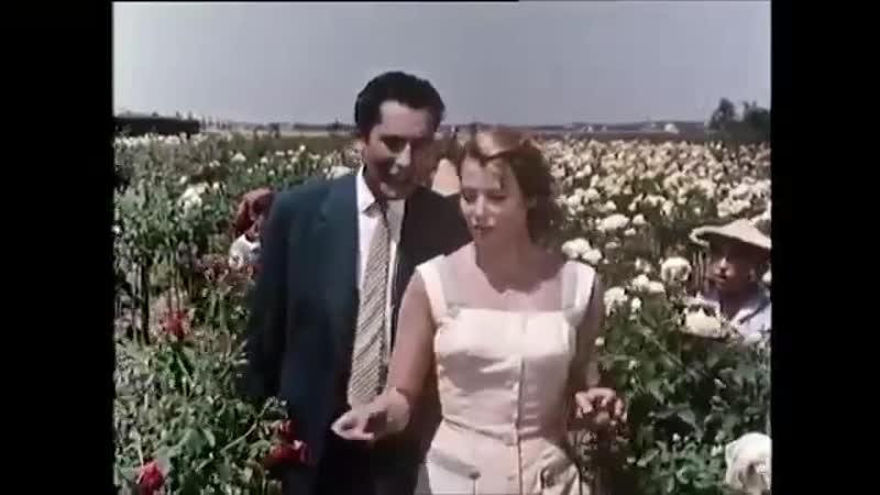 Mit Rosen fängt die Liebe an (1957) Deutsch