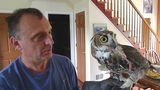 Young imprint of the great horned owl