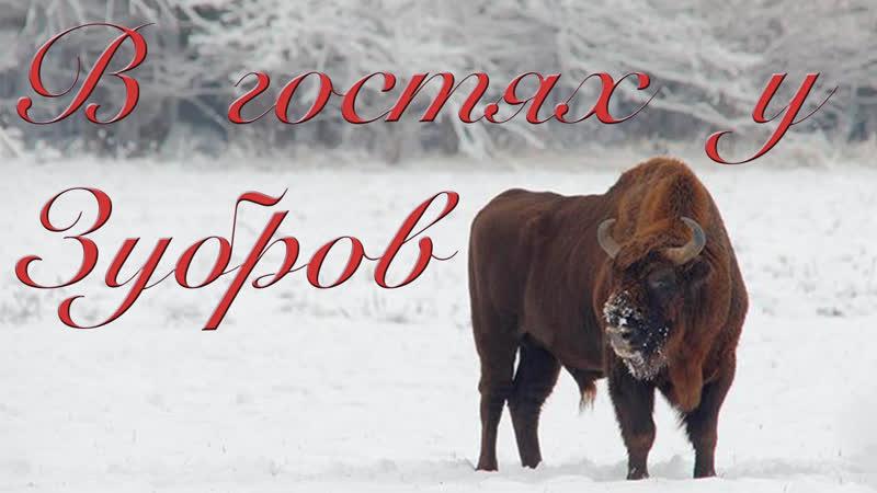 В гостях у Зубров