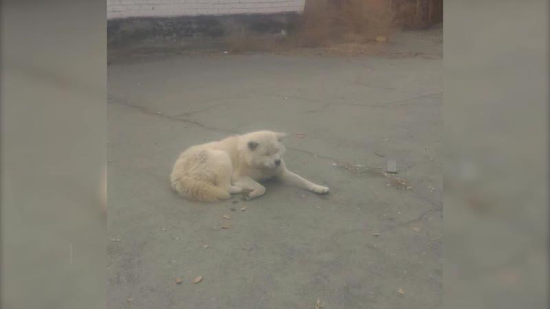 Собака покусала ребенка
