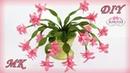 Рождественник Декабрист. Интерьерные цветы МК/Christmas cactus DIY