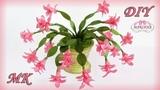 Рождественник (Декабрист). Интерьерные цветы МКChristmas cactus DIY