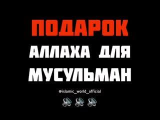 islamic_world_official___Bw9yrKDl-8j___.mp4